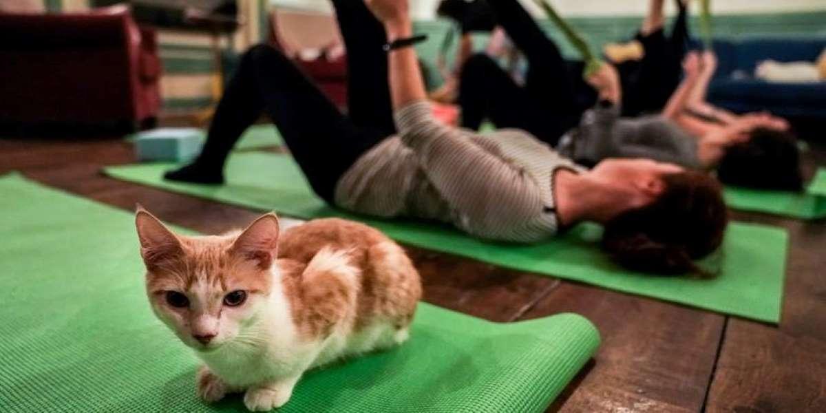 Chats et yoga, pourquoi pas - Happy Yoga